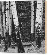 White Bark Aspen Bw Wood Print