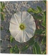 White Beach Flower Wood Print