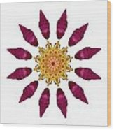 Beach Rose Iv Flower Mandala White Wood Print