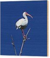 White Beauty Against Blue Wood Print