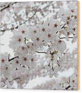 White Beauty Wood Print