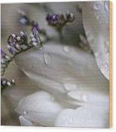 White Beauty Wood Print by John Holloway
