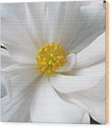 White Begonia Floral Wood Print