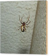 White Belly Spider Wood Print