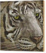 White Bengal Wood Print