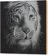 White Bengal Tiger Wood Print