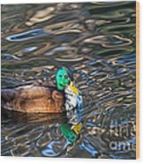 White-bibbed Mallard Wood Print