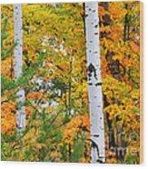 White Birch Autumn Wood Print