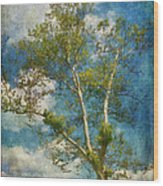 White Birch In May Wood Print