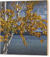 White Birch Tree In Autumn Along The Shore Of Crystal Lake Wood Print