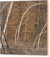 White Birch Trees In The Brown And Orange Forest Wood Print