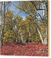 White Birches Of Fall Wood Print