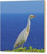 White Bird Green Plants Blue Sea And Sky Wood Print
