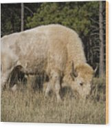 White Bison Symbol Of Hope And Renewal Wood Print