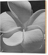 White Bloom B W Wood Print