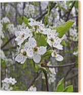 White Blooms Wood Print