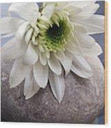 White Blossom On Rocks Wood Print