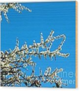 White Blossoms Blue Sky Wood Print