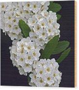White Blossoms Wood Print