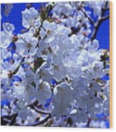 White Blossoms Wood Print