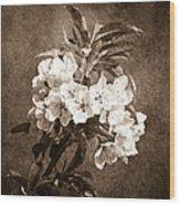 White Blossoms - Sepia Wood Print