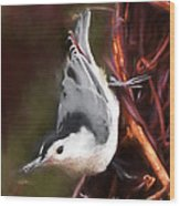 White-breasted Nuthatch - Classic Pose Wood Print
