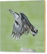 White-breasted Nuthatch Flying With Food Wood Print