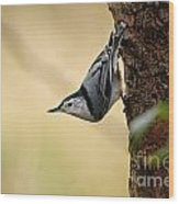 White-breasted Nuthatch Pictures 46 Wood Print