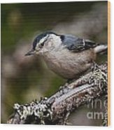 White-breasted Nuthatch Pictures 47 Wood Print