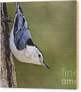 White-breasted Nuthatch Pictures 52 Wood Print