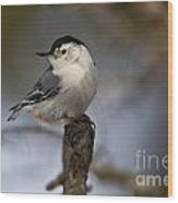 White-breasted Nuthatch Pictures 60 Wood Print