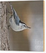 White-breasted Nuthatch Pictures 88 Wood Print