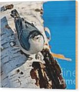 White-breasted Nuthatch Pictures 95 Wood Print