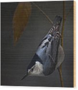 White Breasted Nuthatch Wood Print