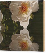 White Briar Rose Reflection Wood Print