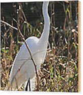 White Brilliance Of The Egret Wood Print