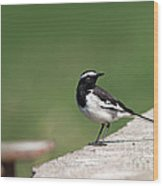 White Browed Wagtail  Wood Print