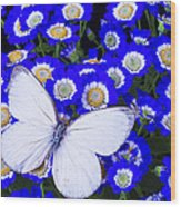 White Butterfly In Blue Flowers Wood Print