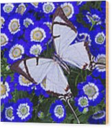 White Butterfly On Blue Cineraria Wood Print