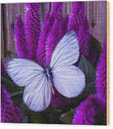 White Butterfly On Flowering Celosia Wood Print