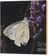 White Butterfly On Lavender Against A Black Background Wood Print