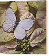 White Butterfly On Poinsettia Wood Print