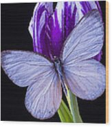 White Butterfly On Purple Tulip Wood Print