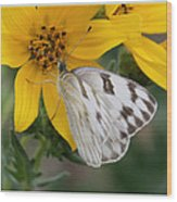 White Butterfly Wood Print