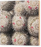 White Cactus Pink Flowers No1 Wood Print