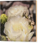 White Cactus Rose Wood Print