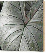 White Caladium Wood Print