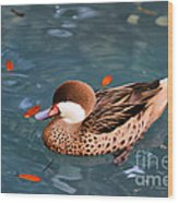 White-cheeked Pintail Wood Print