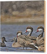 White-cheeked Pintails Wood Print
