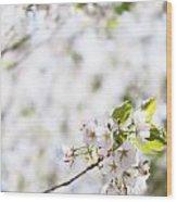 White Cherry Blossom Flowers  Wood Print